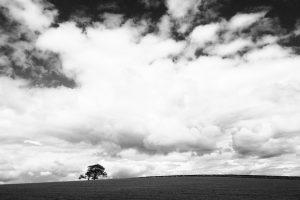 Mitos sobre el Duelo: 19 Conceptos Erróneos sobre las Etapas del Duelo