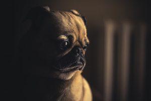 ¿Cómo Superar la Muerte de una Mascota?